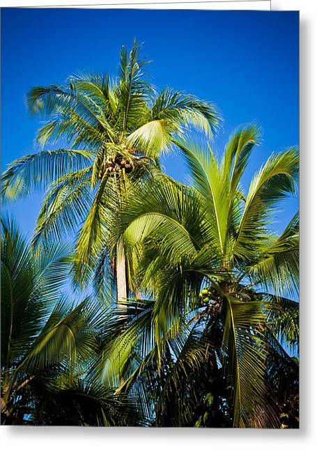 Costa Greeting Cards - Palm Trees in the Sun Greeting Card by Anthony Doudt