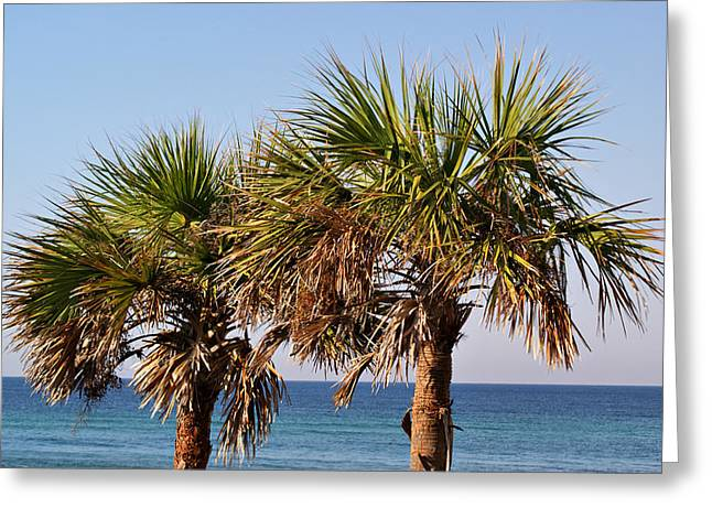 Palm Trees Greeting Card by Sandy Keeton