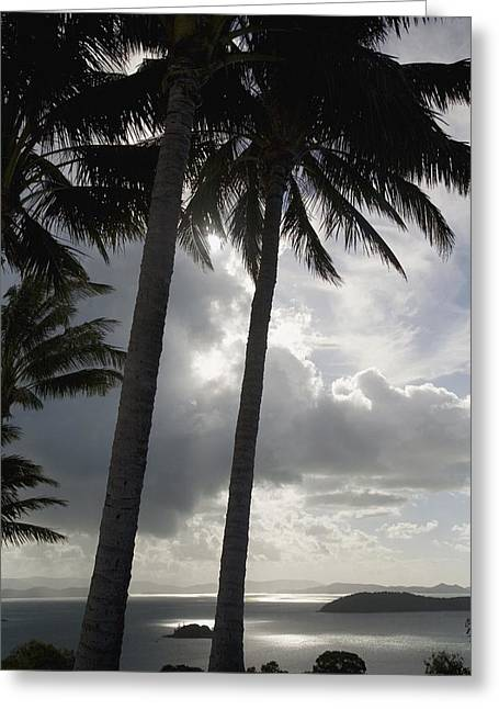 Whitsunday Greeting Cards - Palm Trees Silhouetted Against Dark Greeting Card by Axiom Photographic