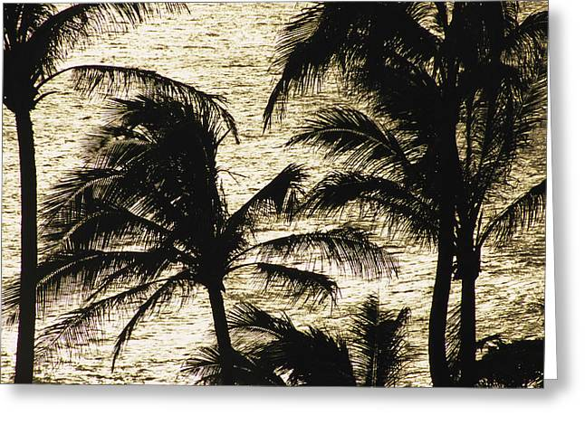 Light And Dark Greeting Cards - Palm Trees Silhouetted Greeting Card by Paul Damien