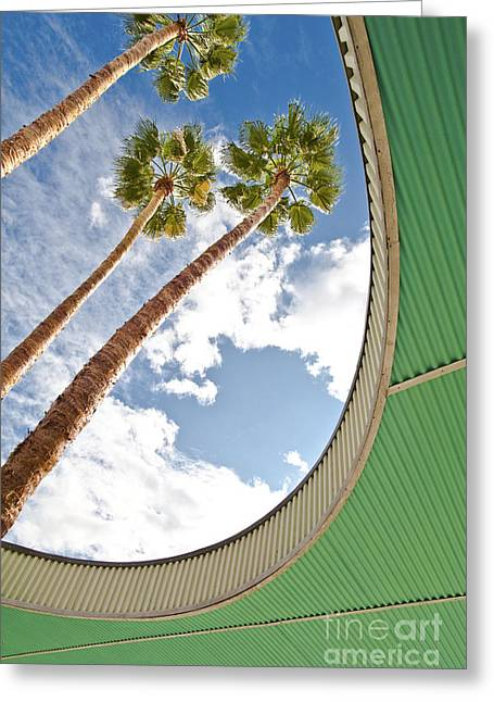 Roof Covering Greeting Cards - Palm Trees Through Architecture Greeting Card by Eddy Joaquim