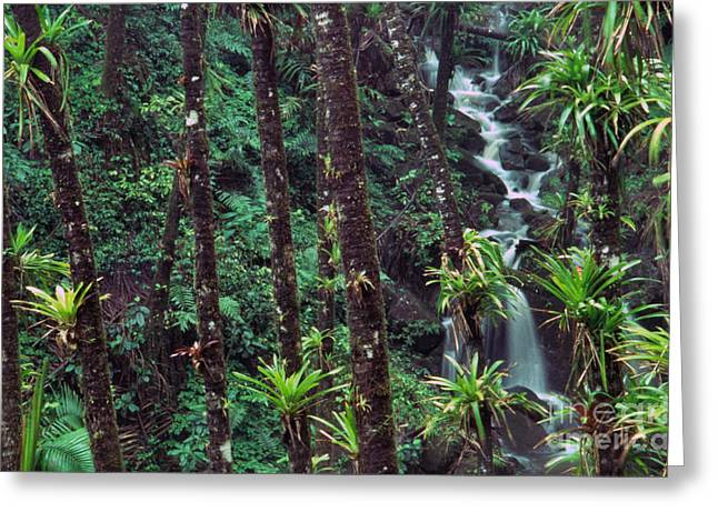 Puerto Rico Greeting Cards - Palm Trunks and Waterfall El Yunque Greeting Card by Thomas R Fletcher