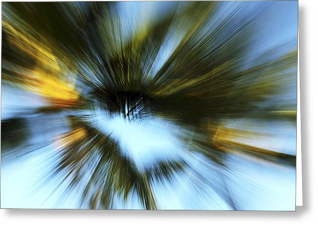 Vince Greeting Cards - Palm Zoom Blur Greeting Card by Vince Cavataio - Printscapes
