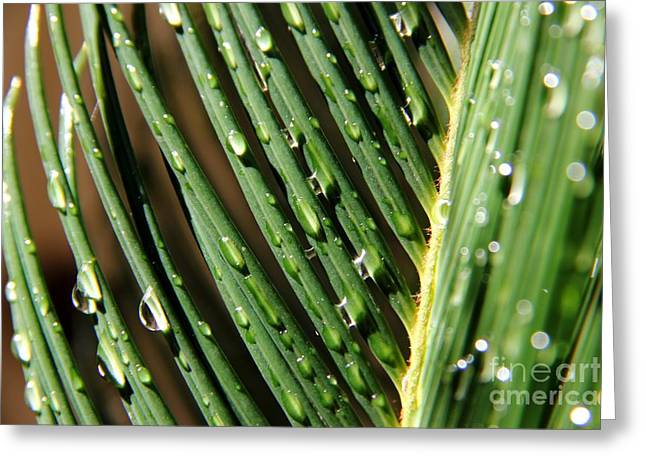 Palms after a Rainy Day Greeting Card by Mariola Bitner