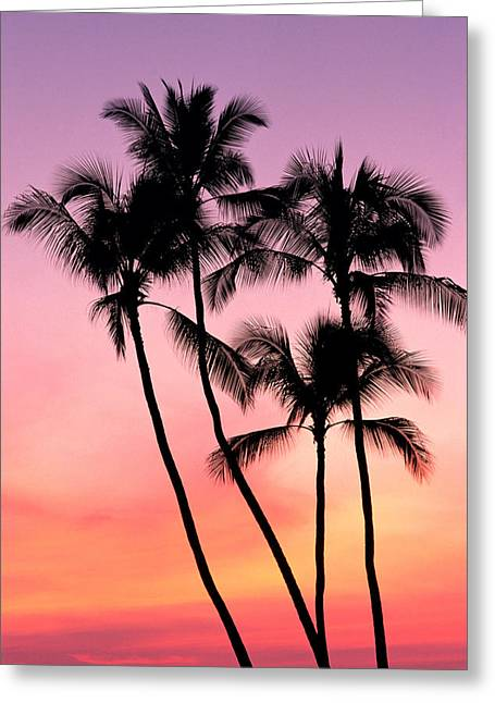 Amazing Sunset Greeting Cards - Palms At Sunset Greeting Card by William Waterfall - Printscapes