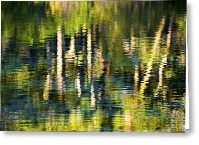 Refection Greeting Cards - Palms in Reflection Greeting Card by Rich Franco