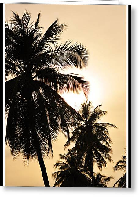 Palms Greeting Card by Mark Britten