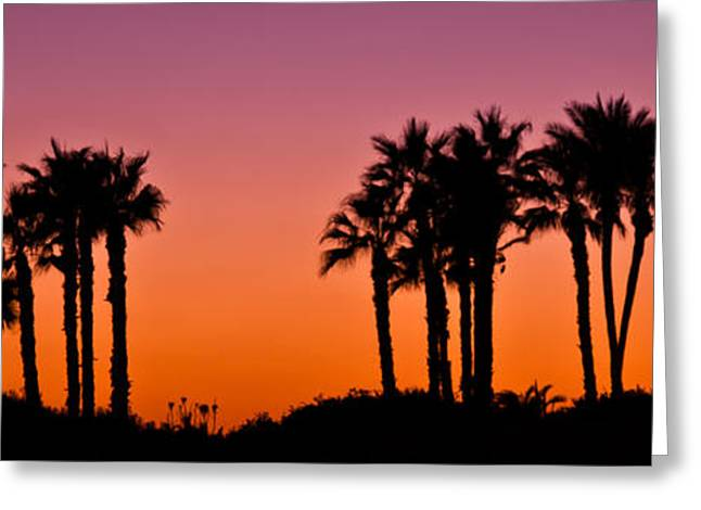 Palms Greeting Cards - Palms Silhouettes at Sunset Greeting Card by Nadya Ost