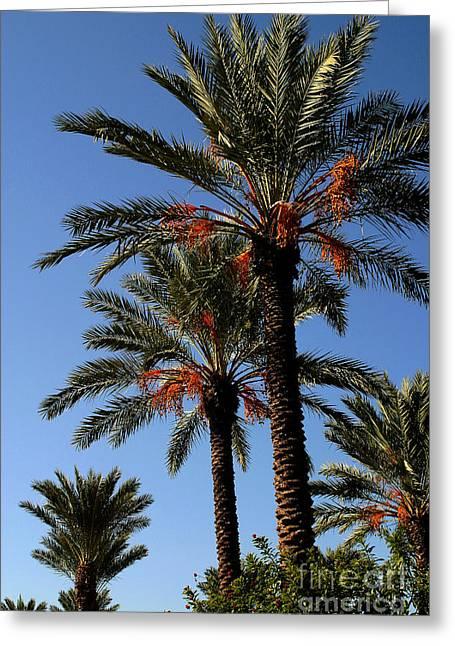 Gary Gingrich Digital Art Greeting Cards - Palms9895B Greeting Card by Gary Gingrich Galleries