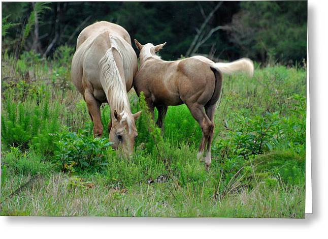 Equine Greeting Cards - Palomino Pals - c0052b Greeting Card by Paul Lyndon Phillips