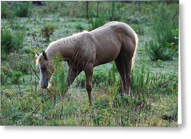 Old 421 Greeting Cards - Palomino Yearling Hiding- c0496a Greeting Card by Paul Lyndon Phillips