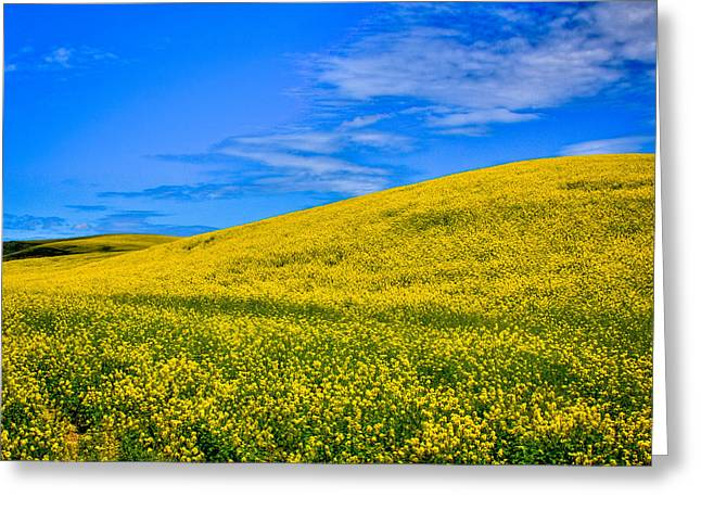 Lanscape Greeting Cards - Palouse Canola Fields Greeting Card by David Patterson