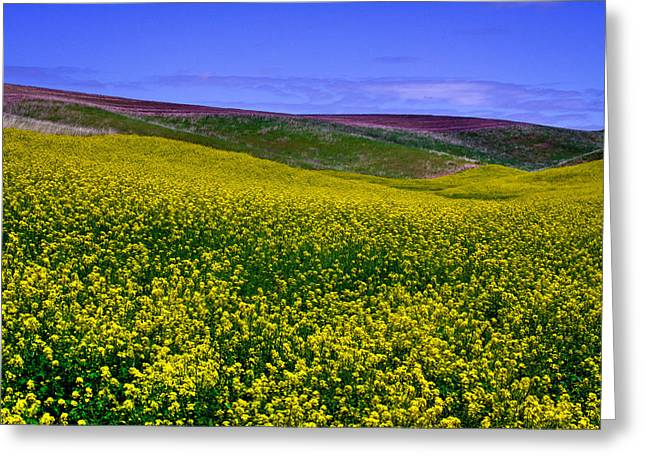 Lanscape Greeting Cards - Palouse Hills Canola Fields Greeting Card by David Patterson