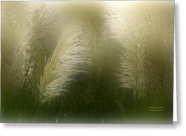 Pampas Grass Greeting Cards - Pampas Dream Greeting Card by Carol Cavalaris