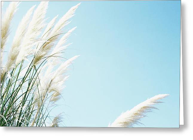 Pampas Grass Greeting Cards - Pampas Grass Greeting Card by Cristina Pedrazzini