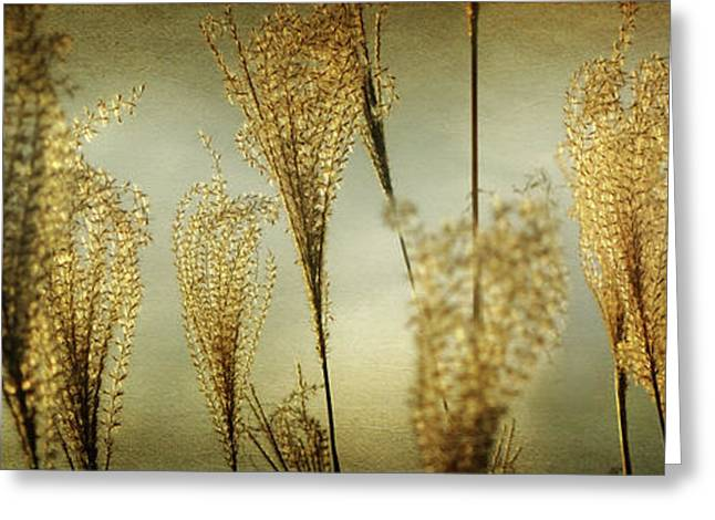 Pampas Grass Greeting Cards - Pampas Grass panoramic Greeting Card by Amy Tyler