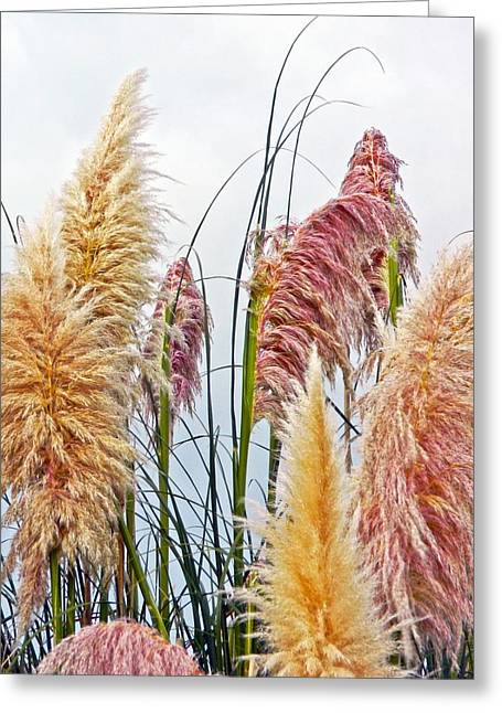 Pampas Grass Greeting Cards - Pampas Greeting Card by Sharon Lisa Clarke
