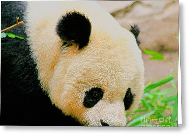 Panda  Greeting Card by Cheryl Young