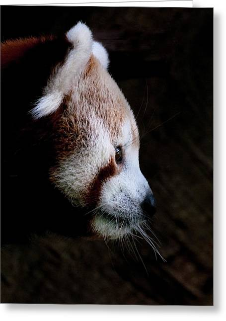Perth Zoo Greeting Cards - Panda Profile Greeting Card by Heather Thorning