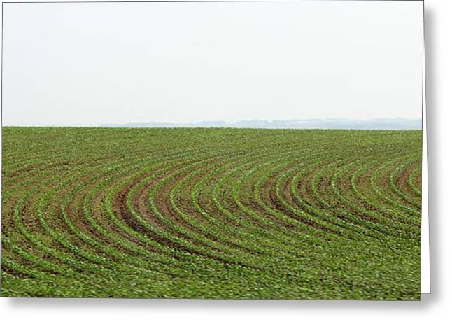 Farmers Field Greeting Cards - Panorama Iowa corns sprout Greeting Card by Yumi Johnson