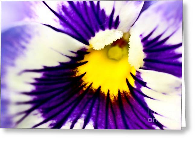Ryan Kelly Greeting Cards - Pansy Violets Greeting Card by Ryan Kelly