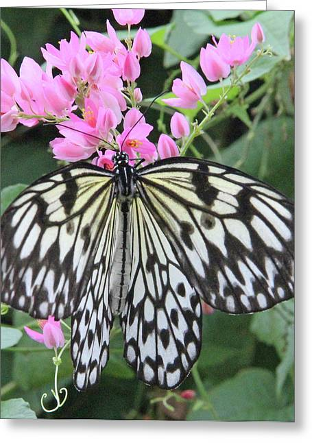 Becky Lodes Greeting Cards - Paper kite on pink flowers Greeting Card by Becky Lodes