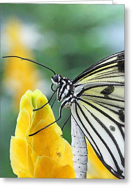 Paper Kite On Yellow Flower Greeting Card by Becky Lodes