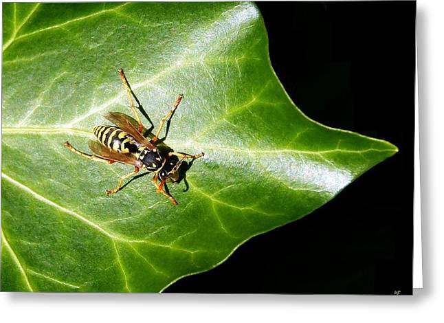 Paper Valley Greeting Cards - Paper Wasp On Ivy Leaf Greeting Card by Will Borden