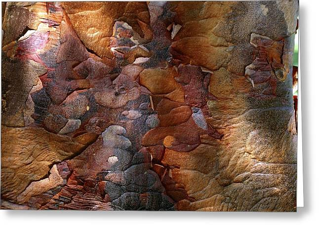 Coloured Bark Greeting Cards - Paperbark Maple Greeting Card by Vaughan Fleming