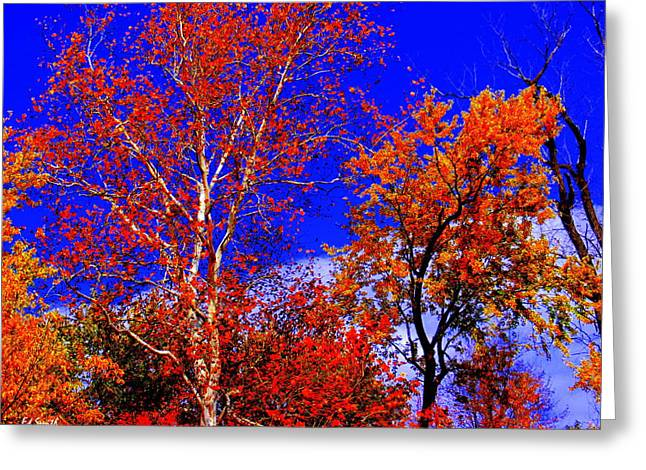 Indiana Trees Greeting Cards - Paprika Greeting Card by Ed Smith