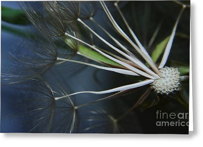 Parachute Seeds  Greeting Card by Jeff Swan
