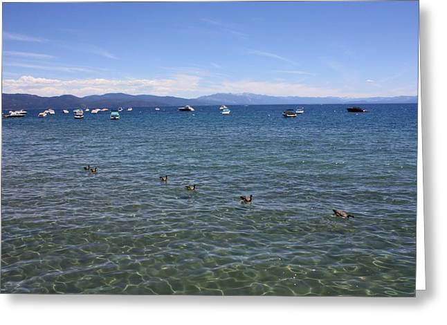 Boats In Water Greeting Cards - Parade of Geese Greeting Card by Carol Groenen