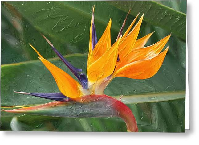 Emanates From Within Greeting Cards - Paradise II Painting Greeting Card by Don  Wright