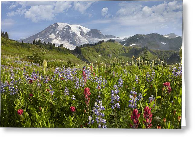 Paradise Meadow Greeting Cards - Paradise Meadow And Mount Rainier Mount Greeting Card by Tim Fitzharris