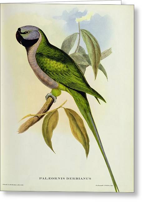 Parrot Greeting Cards - Parakeet Greeting Card by John Gould