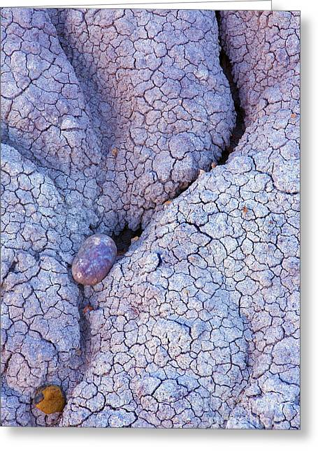 Petrified Forest Arizona Greeting Cards - Parched Desert Greeting Card by Mike  Dawson