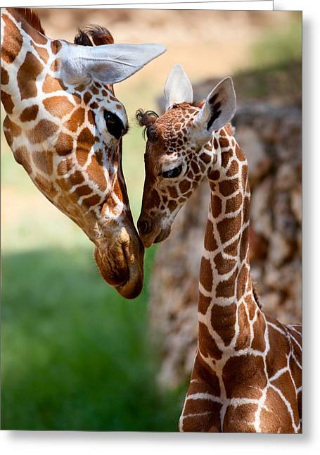Young Greeting Cards - Parent-Child Relationship Greeting Card by Yuri Peress
