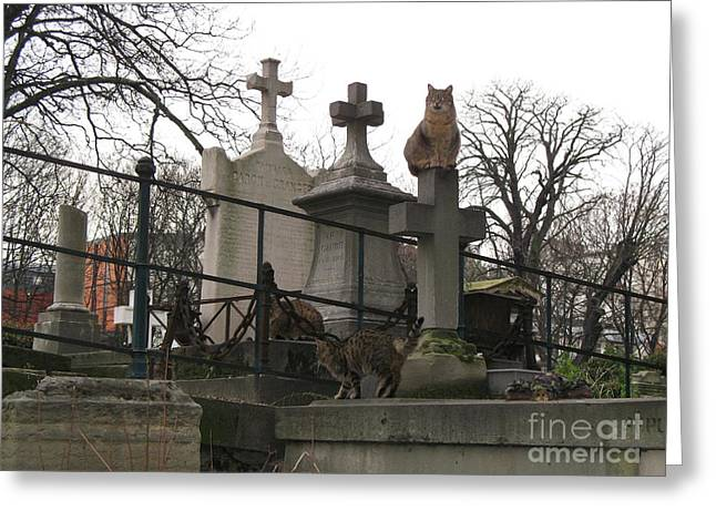 Paris Cemetery - Pere La Chaise - Wild Cats Roaming Through Cemetery Greeting Card by Kathy Fornal