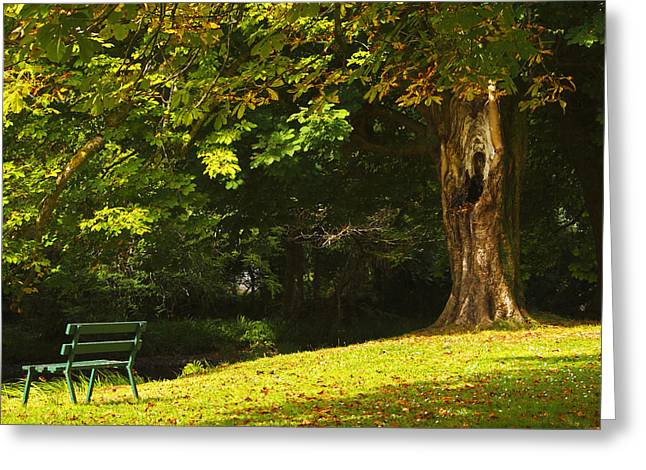 Park Benches Greeting Cards - Park Bench Beside The Owenriff River In Greeting Card by Trish Punch