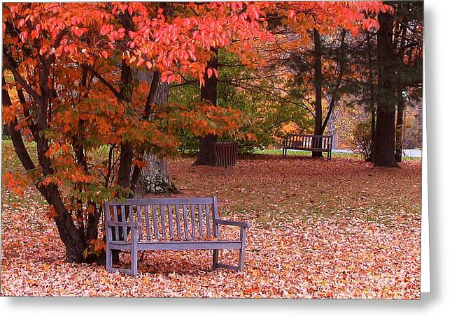 Park Benches Greeting Cards - Park Bench in Fall Greeting Card by Jack Schultz
