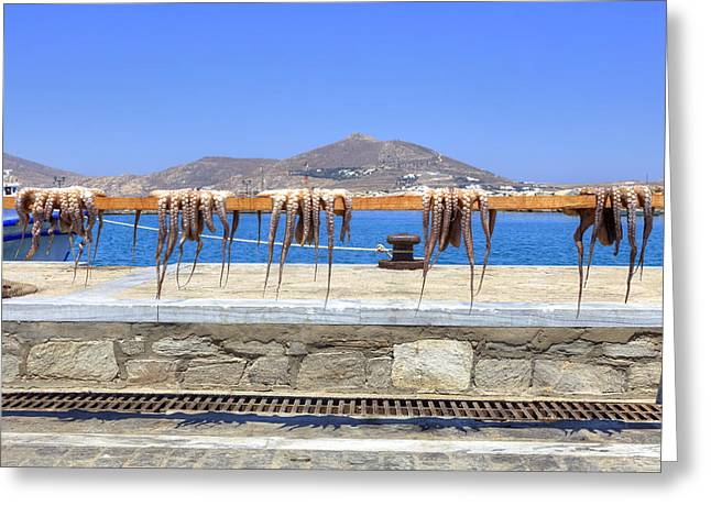 Squid Greeting Cards - Paros - Cyclades - Greece Greeting Card by Joana Kruse
