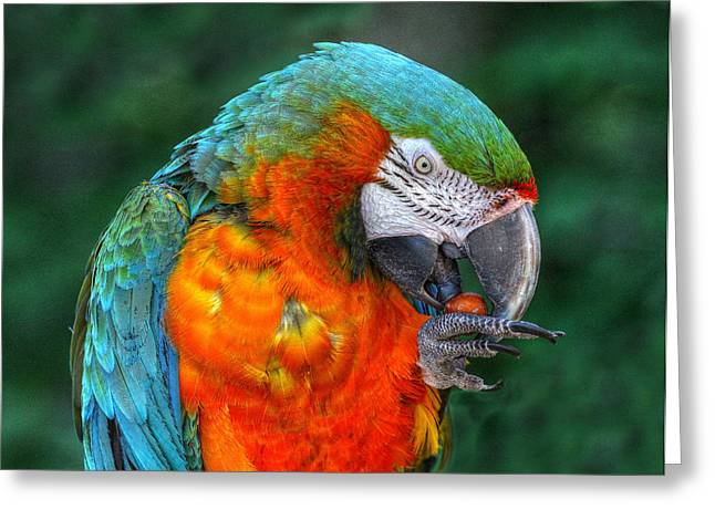 Parrot Head Greeting Cards - Parrot Head Greeting Card by Randy Steele