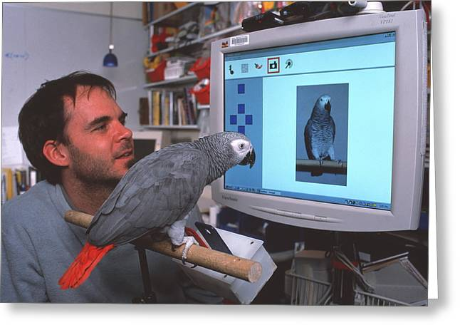 African-american Institute Greeting Cards - Parrot Playing With Computer Greeting Card by Volker Steger