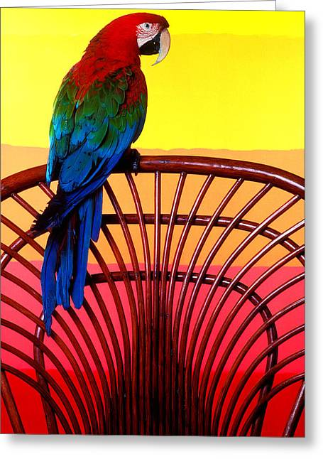 Parrot Greeting Cards - Parrot Sitting On Chair Greeting Card by Garry Gay