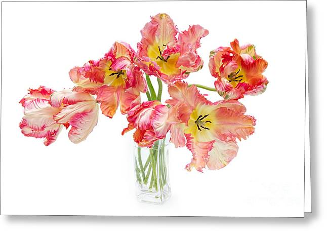 Spring Bulbs Greeting Cards - Parrot Tulips in a Glass Vase Greeting Card by Ann Garrett