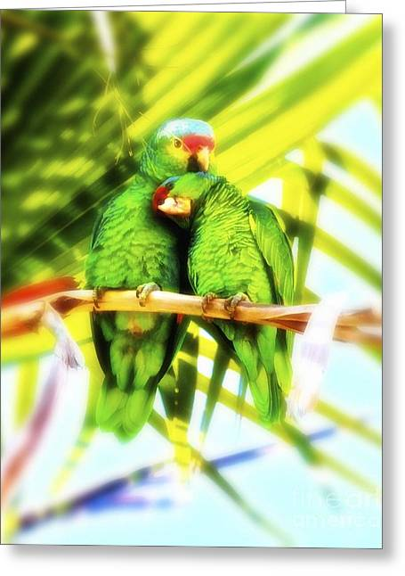 Parrotheads Greeting Card by Gus McCrea