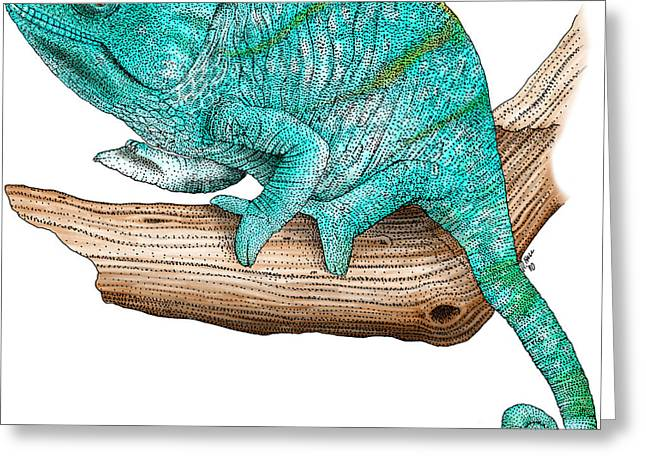Madagascar Drawings Greeting Cards - Parsons Chameleon Greeting Card by Roger Hall and Photo Researchers