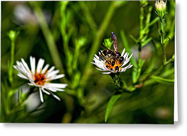 Yellow Jacket Greeting Cards - Party Flower 2 Greeting Card by Steve Harrington