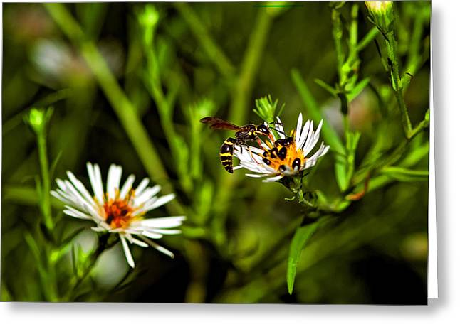 Yellow Jacket Greeting Cards - Party Flower Greeting Card by Steve Harrington