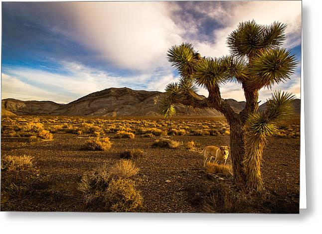 Jean Noren Greeting Cards - Pasha in Death Valley Greeting Card by Jean Noren